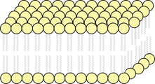 Lipid Bi-layer